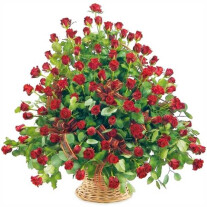 100 roses in a basket